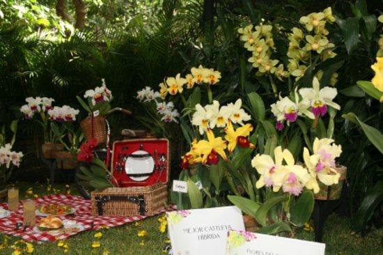 Jardin Botanico de Medellin: uno de los stands de la exposición de orquideas