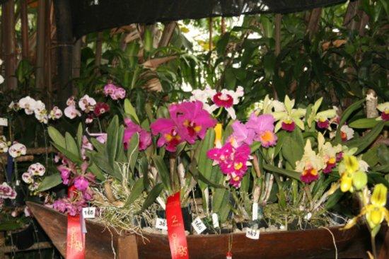 Jardin Botanico de Medellin: estas son algunas de las orquideas premiadas