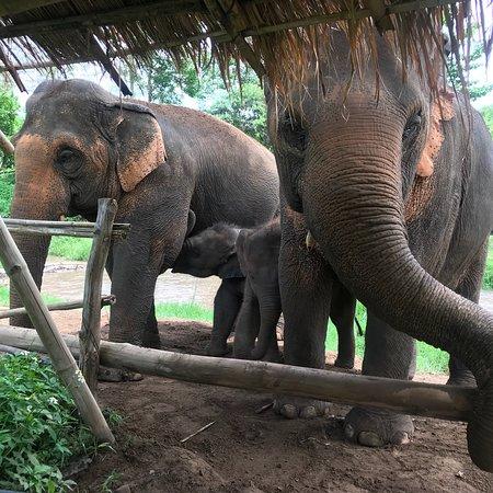 Elephant Nature Park Photo