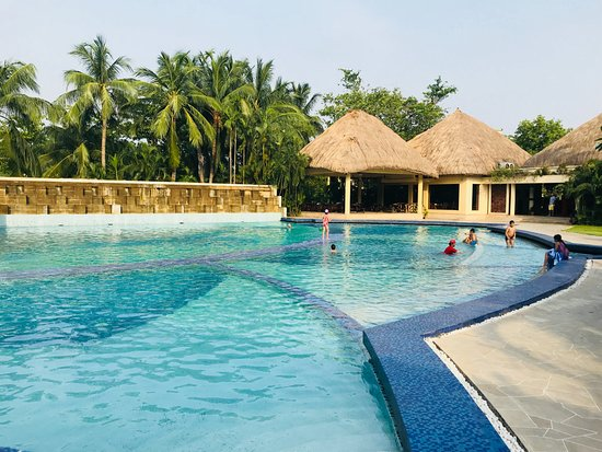 Vedic Village Spa Resort: Swimming Pool with crystal clear water
