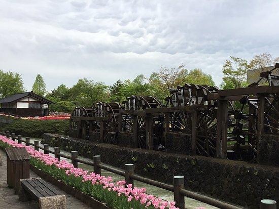 Tonami Tulip Park: Shibazakura