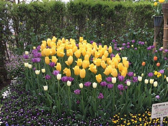 Tonami Tulip Park: Wonder Garden