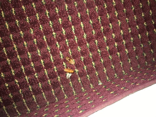 Wasco, Californië: Dead insects all over the room disgustin