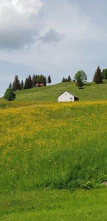 Amden, Switzerland: 20180526_153454_large.jpg