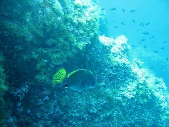 Asinara Scuba Diving: Punta Pesta Bianca