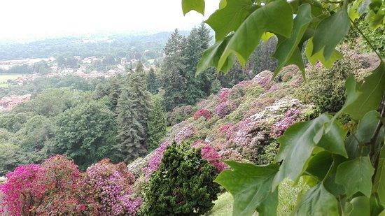 Pollone, Italia: vallata dei rododendri