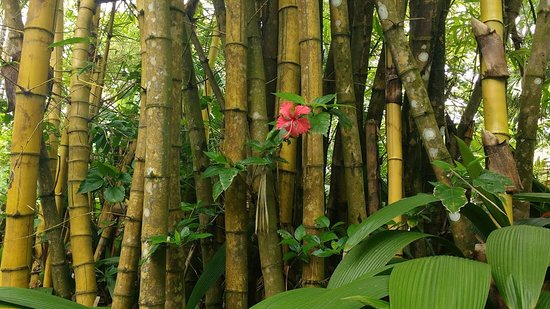 Piro Jungla Conservation Ecotours รูปภาพ
