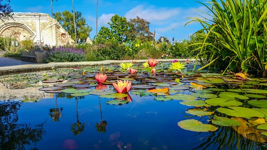 Mission San Juan Capistrano: Water and Flower