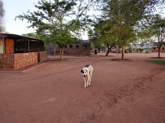 Maltahohe, Namibia: Dog