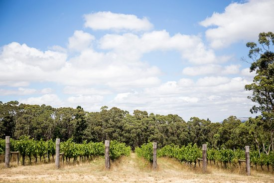 Mount Macedon Winery: MMW vineyard