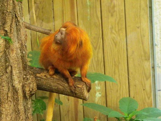 Billet d'entrée pour le ZooParc de Beauval : singe