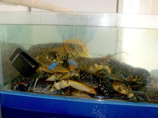 Chez Jacky: les homards