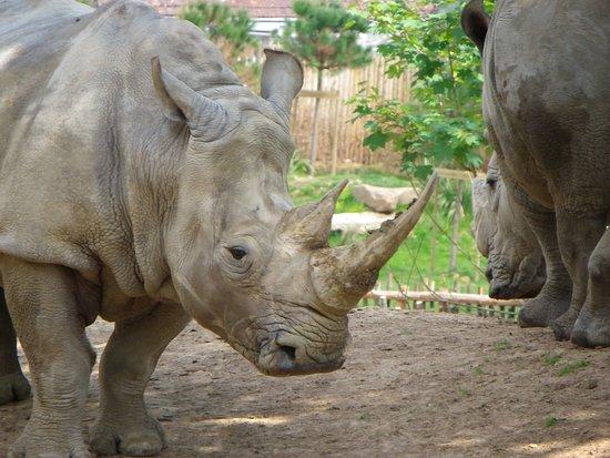 Billet d'entrée pour le ZooParc de Beauval : rhino