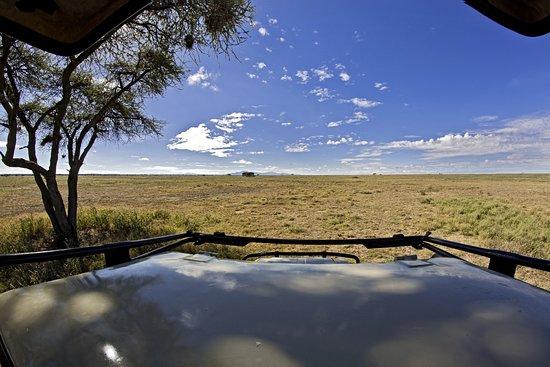 Predator Safari -4 Days: Driving across the endless plains of Serengeti