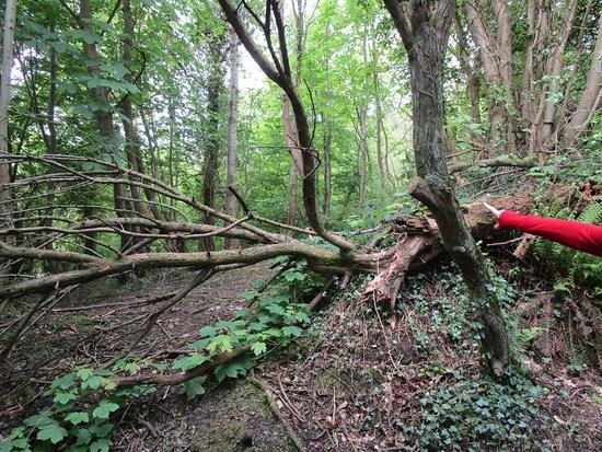 Bashfordsland Wood and Oakfield Glen: Yonder, Mister Frodo!