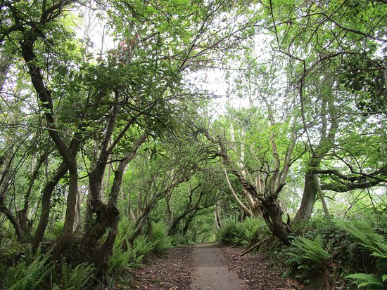 Bashfordsland Wood and Oakfield Glen: The not quite dark enough hedges.
