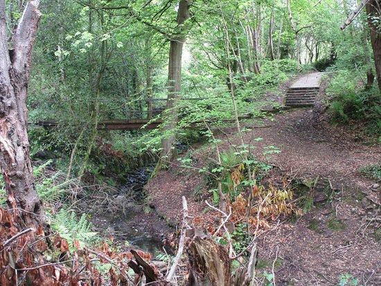 Bashfordsland Wood and Oakfield Glen: Bridge.
