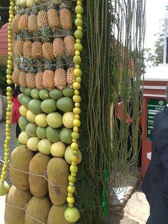 Sim`s Park: Fruit show @ Sims's Park, Coonoor
