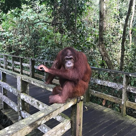 Sepilok Orangutan Sanctuary: photo0.jpg