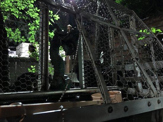 Hanazono Shrine : 夜の手水舎