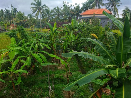 Molecha Guest House: Garden View