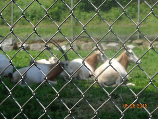 Lehigh Valley Zoo : Sign for Scimitar Horned Oryx