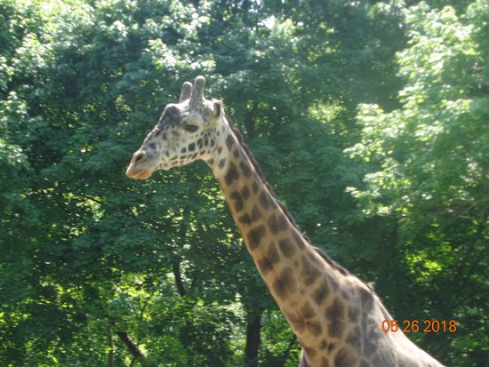 Lehigh Valley Zoo: Murphy