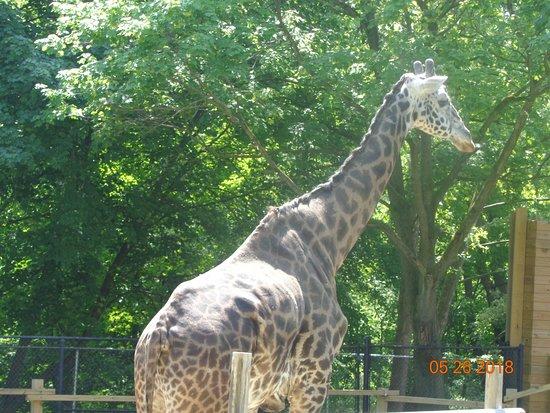 Lehigh Valley Zoo: Murphy