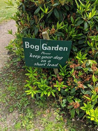 Forde Abbey & Gardens: Forde Abbey Bog Garden