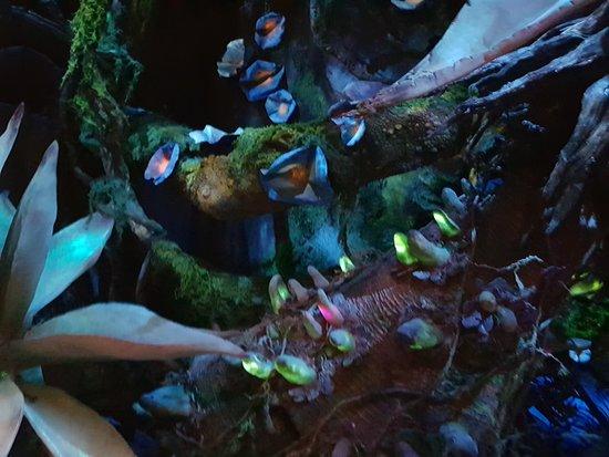 Pandora – The World of Avatar: As Flores de Pandora à Noite