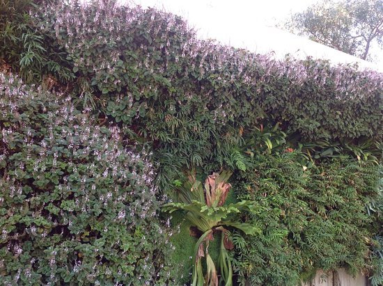 Adelaide Zoo: This wall garden was at the entrance way to the zoo. Looked really great.