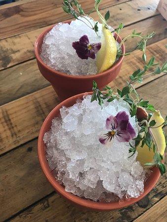 Bottle & Thyme: The Plant Pot