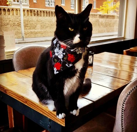 The Chelsea Pensioner : Our resident Mouser, Mr Mackay