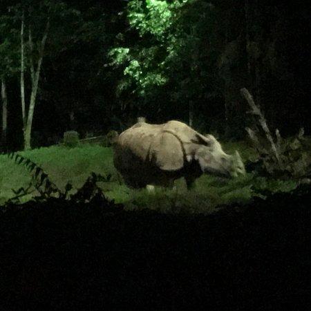 Night Safari Φωτογραφία