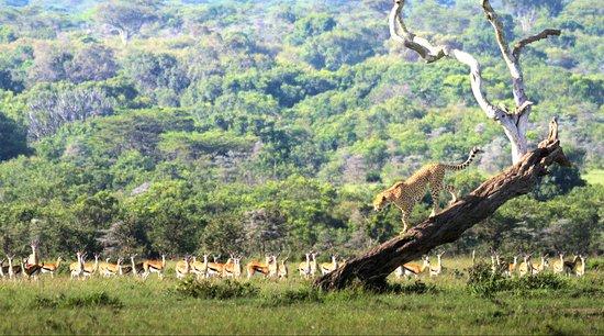 写真Beacon Safaris枚