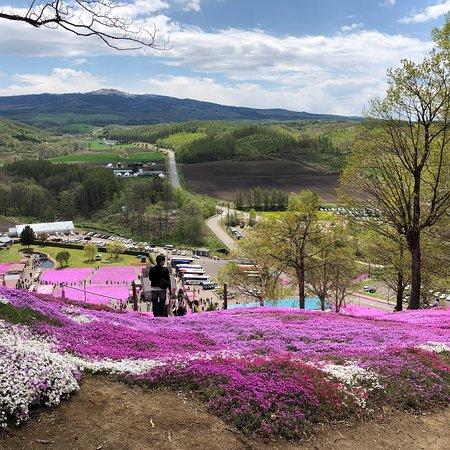 Higashimokoto Shibazakura Park ภาพถ่าย