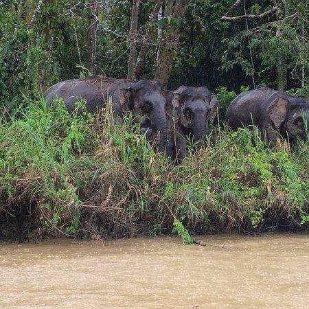 Sukau, Malaysia: photo2.jpg