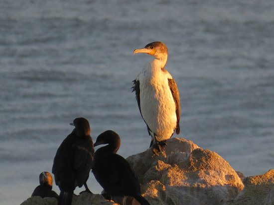 Sea Notes : Cormorants at Sunset