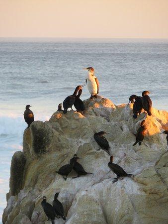 Sea Notes : Cormorants on the Rocks
