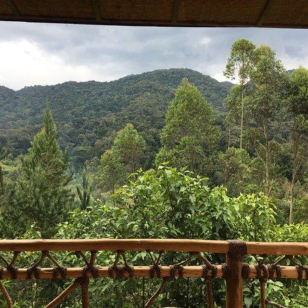 Ichumbi Gorilla Lodge Photo