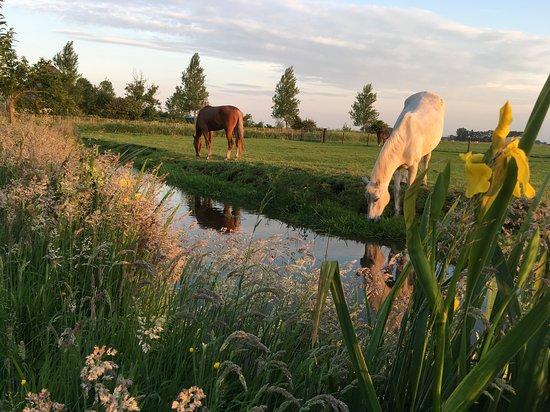 Warder, The Netherlands: Blick auf die Weide hinter dem Garten