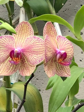 Orchids in Parque Bicentenario CDMX