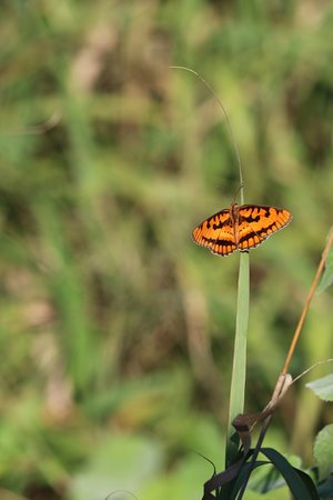 Zebra Hills Safari Lodge: Butterfly