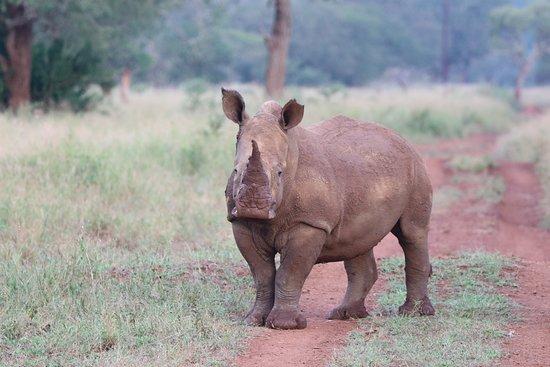 Zebra Hills Safari Lodge: Baby rhino