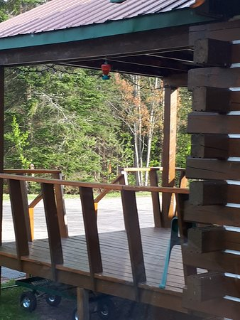 Adventure Lodge: View from dining room of a Hummingbird at the feeder