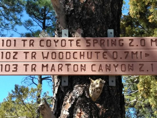 Woodchute Wilderness Area: Many Trails
