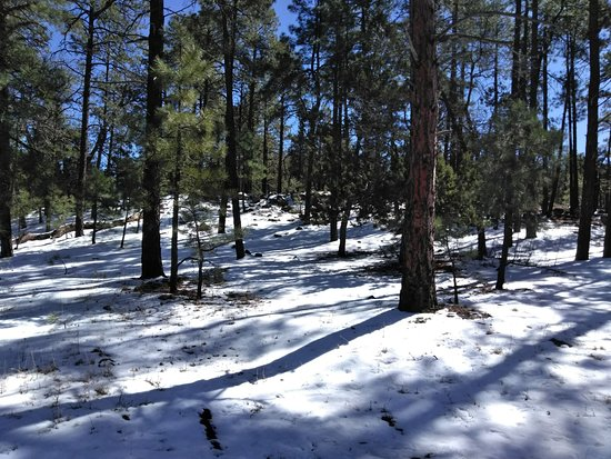 Woodchute Wilderness Area: Different side of Arizona