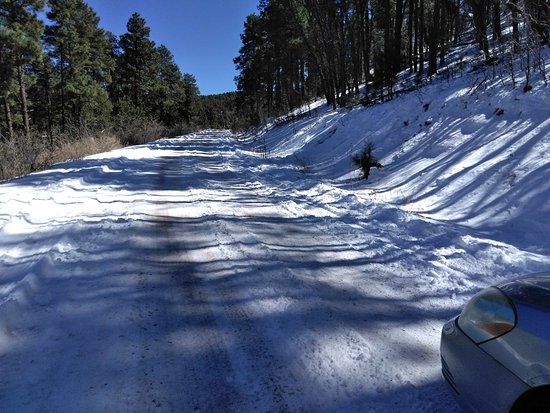 Woodchute Wilderness Area: Snowy road but only in winter