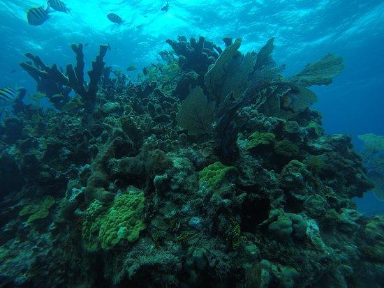 Emilio Dive Zone: Arrecife Natural en Isla Mujeres