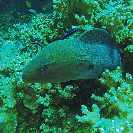 Manta Diving Image